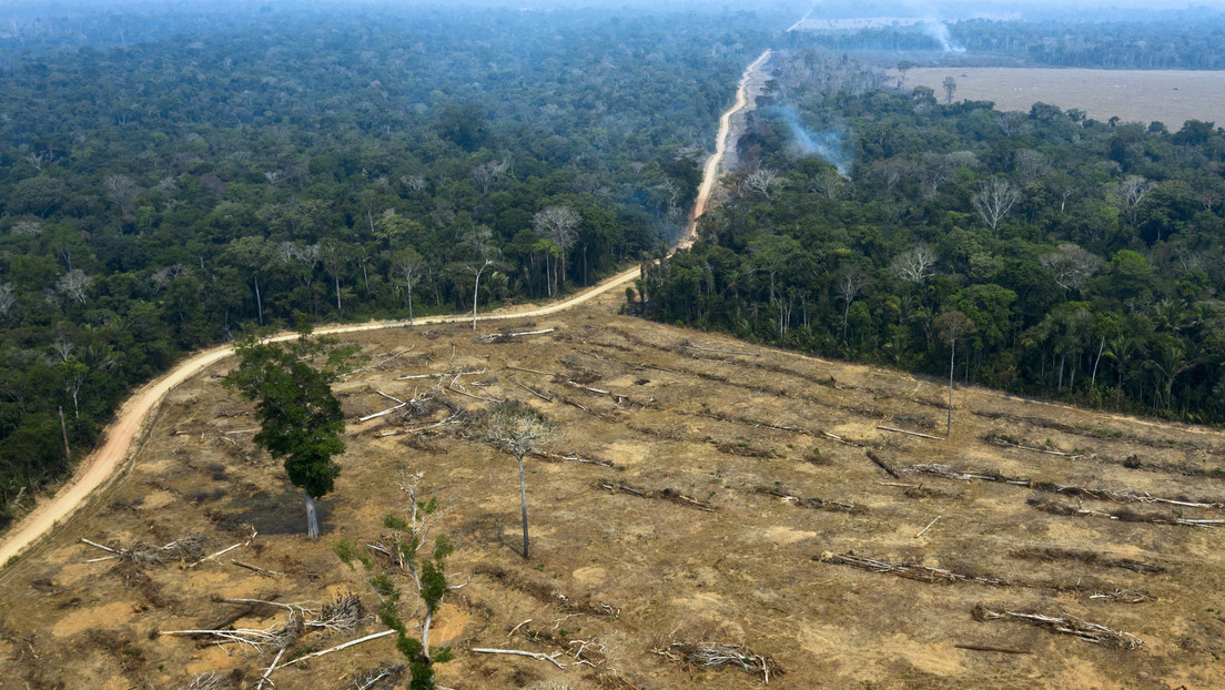 La deforestación en la Amazonía empieza el año con tasas récord y podría alcanzar peores niveles que en 2019