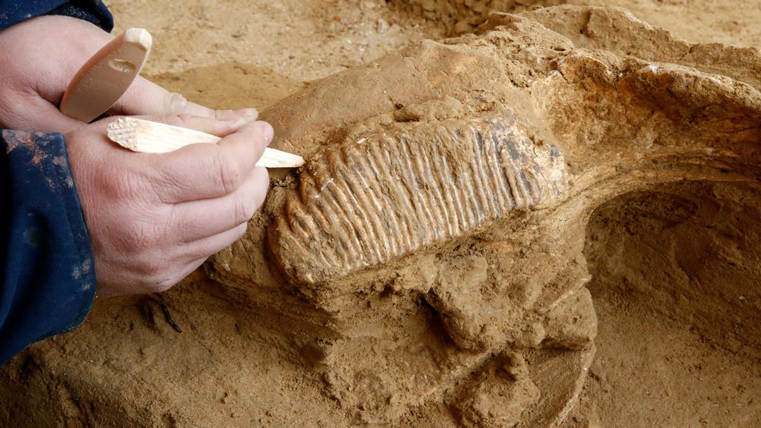 Hallan en Rusia una enorme choza hecha de huesos de mamut