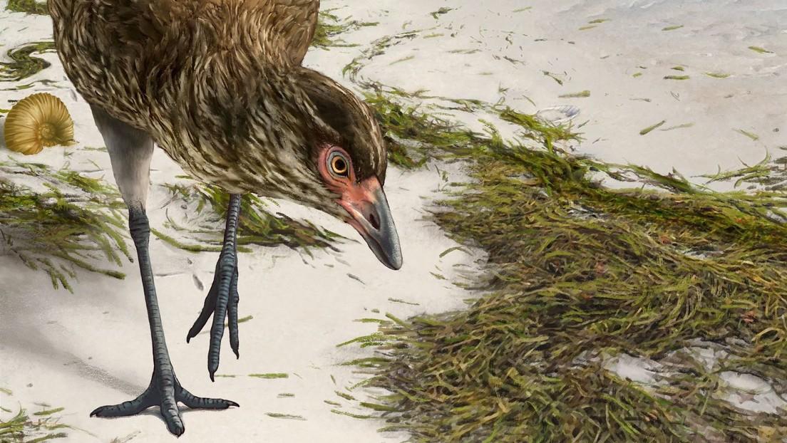 El fósil de un 'pollo maravilla' de la era de los dinosaurios arroja luz sobre los orígenes de las aves modernas