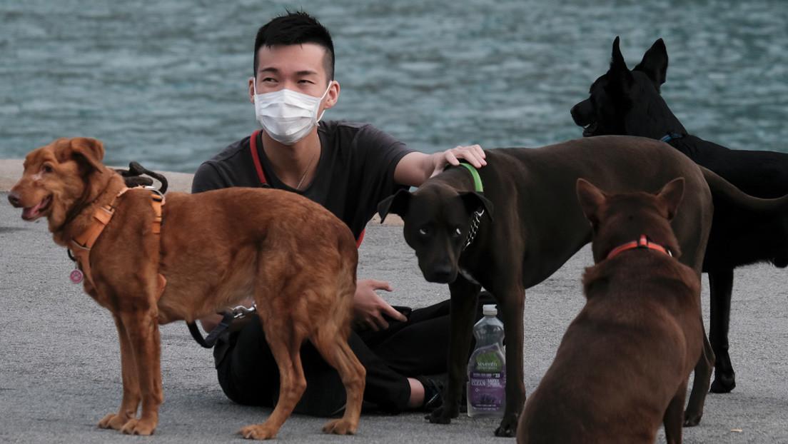 Abandonan a perros y gatos por temor a transmisión de coronavirus