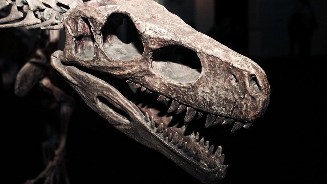 Un estudio sugiere que un largo período de oscuridad en la Tierra contribuyó a la extinción de los dinosaurios