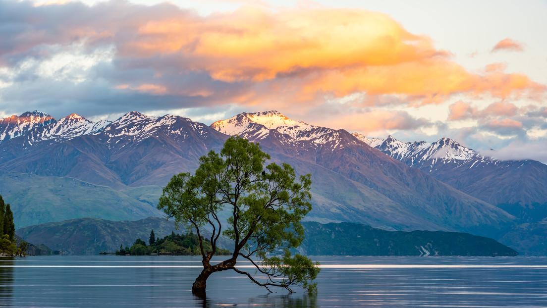 Dañan con una sierra el árbol más conocido de Nueva Zelanda (FOTOS)