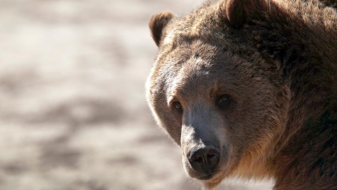 VIDEO: Un oso pardo se pasea por las calles vacías en España en medio del brote de covid-19