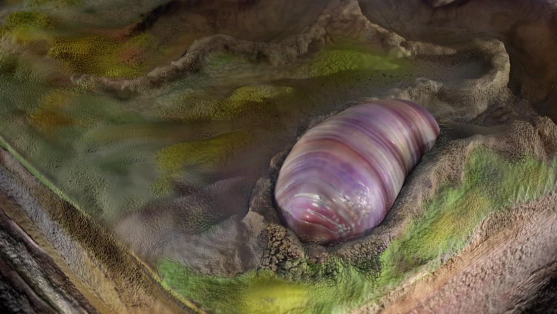 Hallan en Australia restos del que pudo ser el primer antepasado de muchos animales modernos