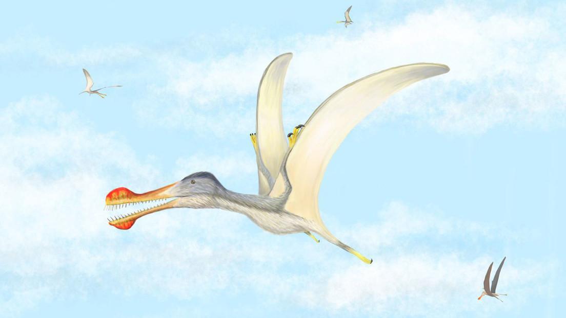 Descubren tres nuevas especies de pterosaurio de hace 100 millones de años