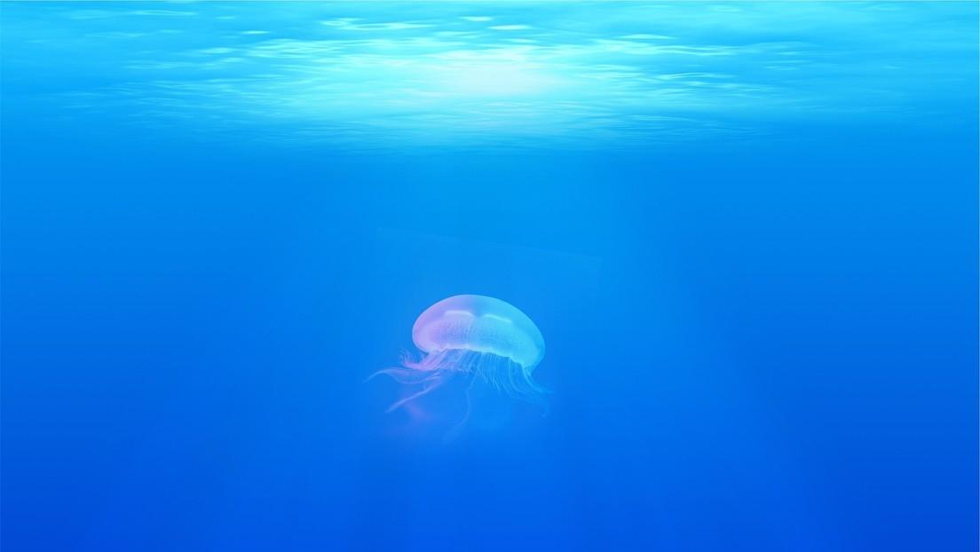 Criaturas marinas nos protegen de los virus presentes en el océano al alimentarse con ellos