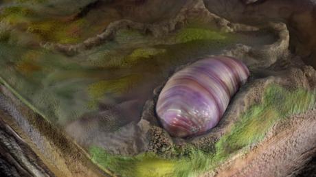 gusanos parásitos conservados