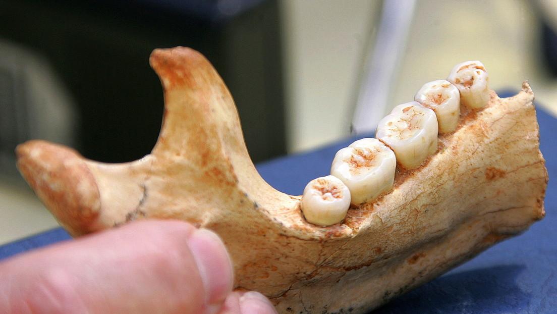 Científicos recuperan en un fósil de hace 800.000 años la evidencia genética humana más antigua obtenida hasta la fecha