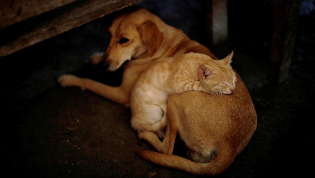 Científicos chinos evalúan qué mascota es más susceptible de contraer el coronavirus
