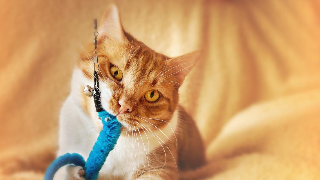 VIDEO: Un gato y su dueño se unen a un reto de baile y conquistan TikTok