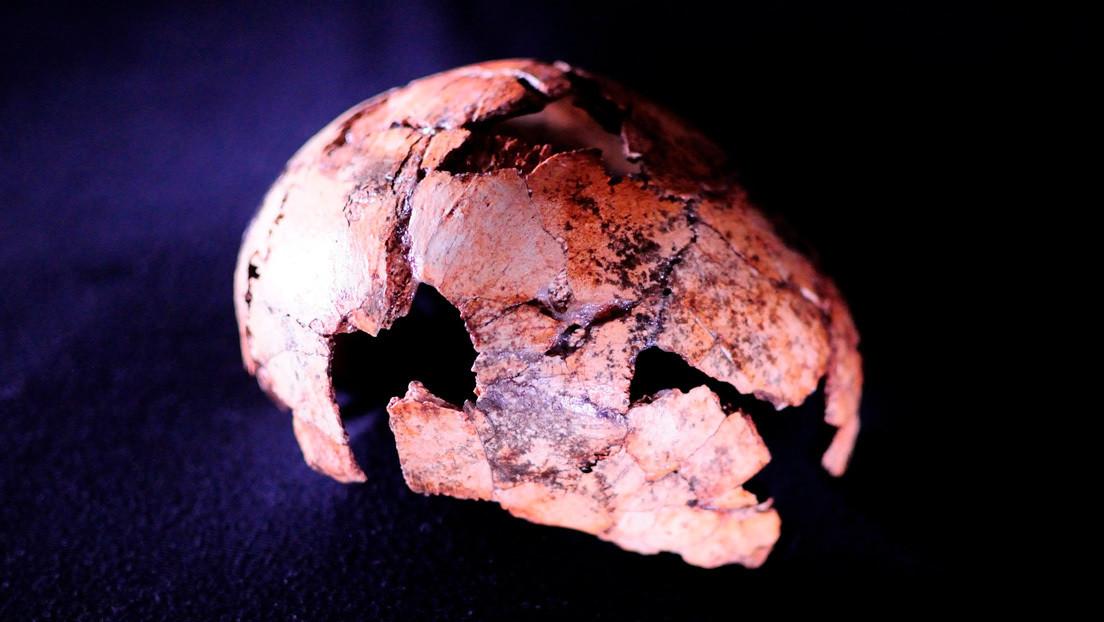 El cráneo de 'Homo erectus' descubierto en Sudáfrica apunta a que nuestro antepasado existió 200.000 años antes de lo que se pensaba