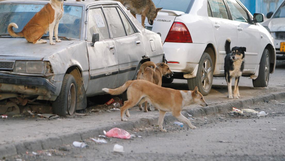 Señalan a los perros como posible eslabón en el camino del coronavirus al 'paciente cero'