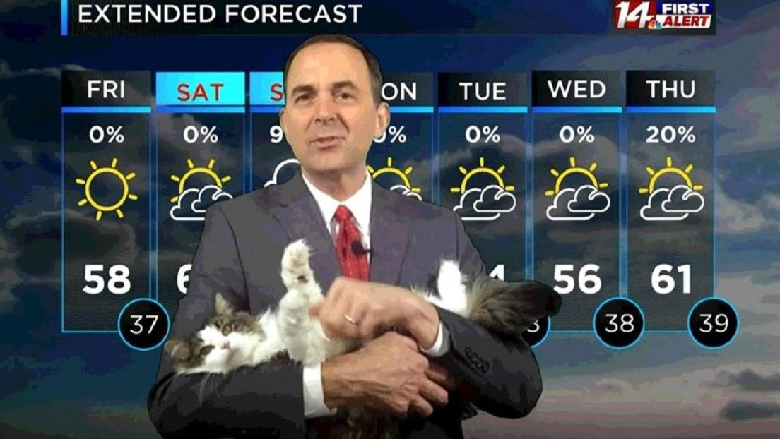 El meteorólogo sensación en redes sociales: presenta con su gato desde casa