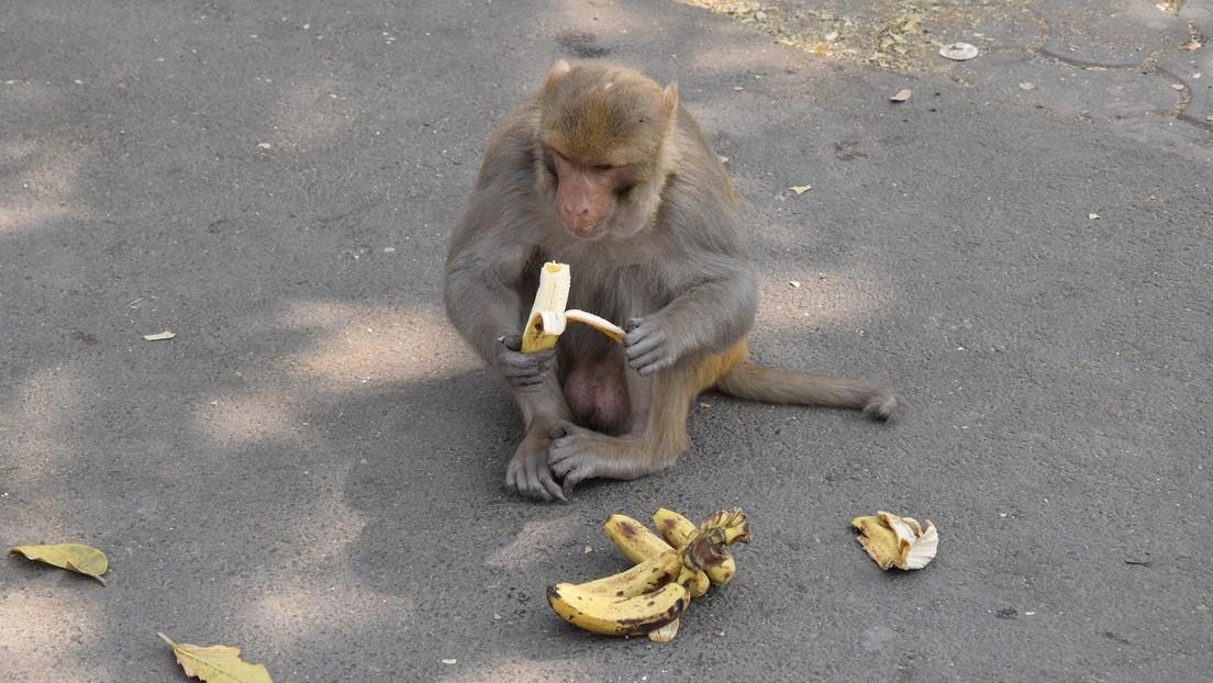 FOTO: Se viraliza una imagen de monos en perfecto distanciamiento social