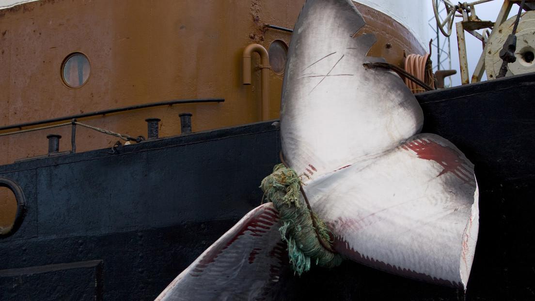 Se cancela en Islandia la caza de ballenas por segundo año consecutivo