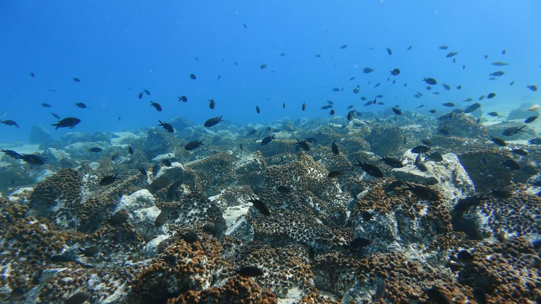 Científicos descubren la concentración más alta de microplásticos en el fondo marino