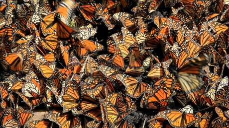 """Descubren que el """"apocalipsis de los insectos"""" es más complicado de lo que se pensaba"""