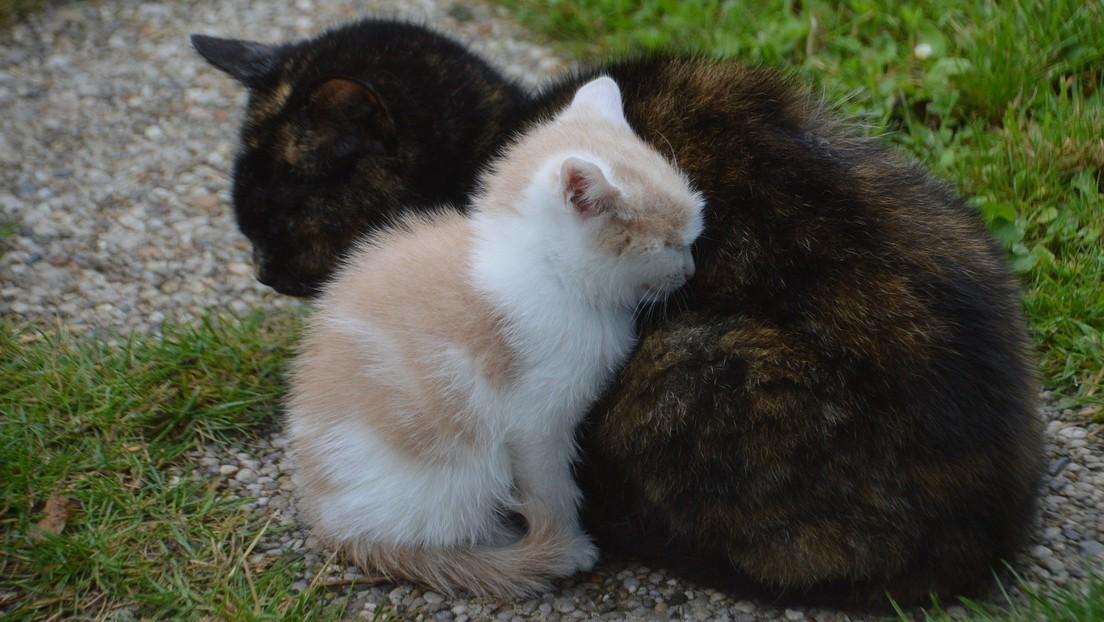 FOTOS: Una gata lleva a su cría enferma a un hospital en Turquía y los atienden