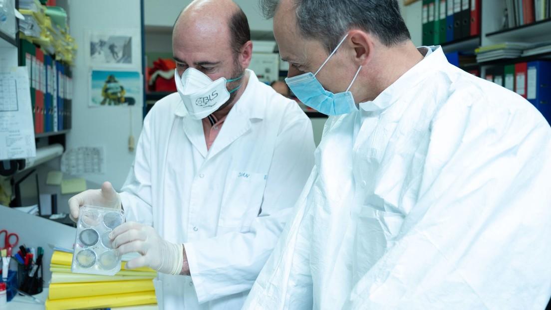 Investigadores españoles comienzan a probar una vacuna contra el coronavirus en animales