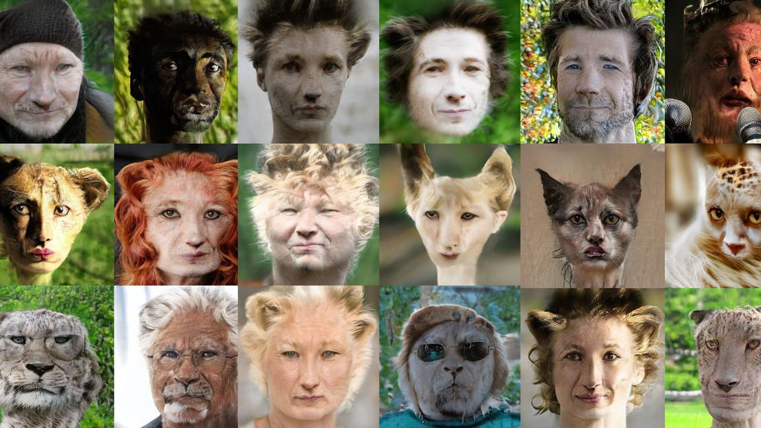 FOTOS, VIDEO: Así se ven rostros humanos en su 'versión' animal gracias a la inteligencia artificial
