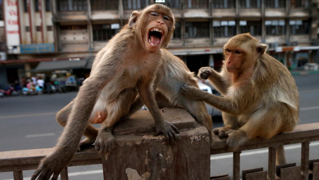 VIDEO: Graban cómo un mono montado en bicicleta intenta raptar a una niña