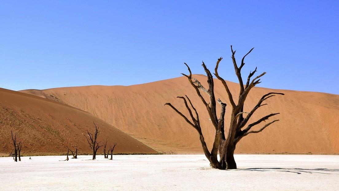 Predicen que hasta 3.500 millones de personas vivirán en un clima similar al del Sahara para 2070