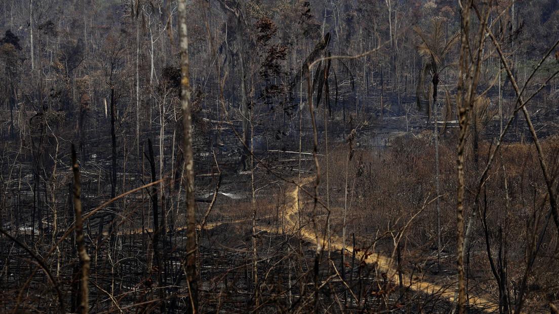 Las alertas por deforestación en la Amazonía brasileña aumentaron un 63,75 % en abril
