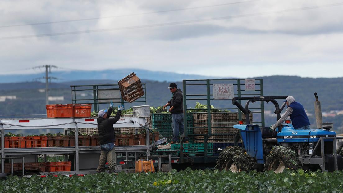 """Exponerse al contagio o prescindir de ingresos: el """"inaceptable"""" dilema de los trabajadores indocumentados en EE.UU."""