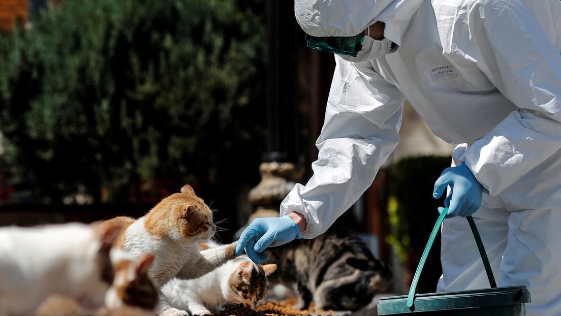 Un perro y tres gatos contraen coronavirus en los Países Bajos