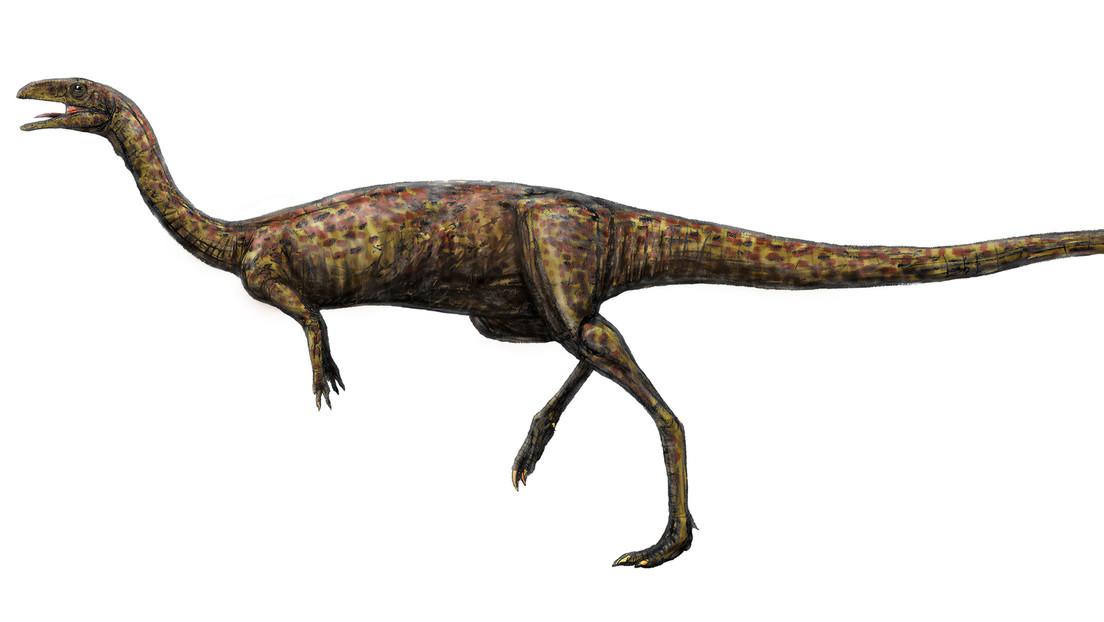 Realmente Raro Encuentran Restos De Un Inusual Dinosaurio De Cuello Largo En Australia Rt Tyrannosaurus rex t rex dinosaurio con sonido 50 cm largo. cuello largo en australia