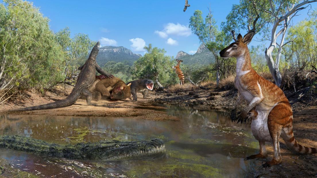 Revelan que los primeros australianos coexistían con lagartos y canguros enormes (IMÁGENES)