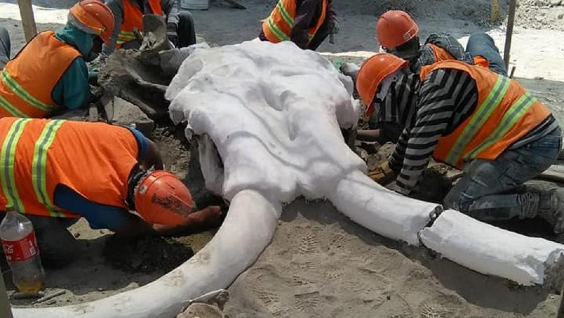 FOTOS: Encuentran restos de al menos 60 mamuts durante la construcción del nuevo aeropuerto de la Ciudad de México