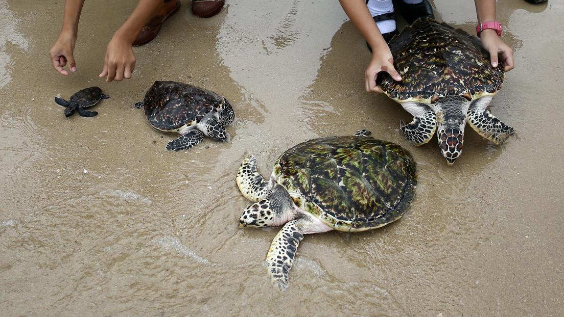 Congela 107 tortugas en peligro de extinción y recibe una dura condena de 13 años