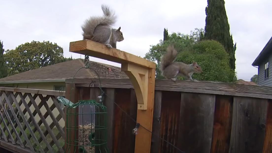 VIDEO: Exingeniero de la NASA construye un circuito de obstáculos para que las ardillas no le roben las nueces