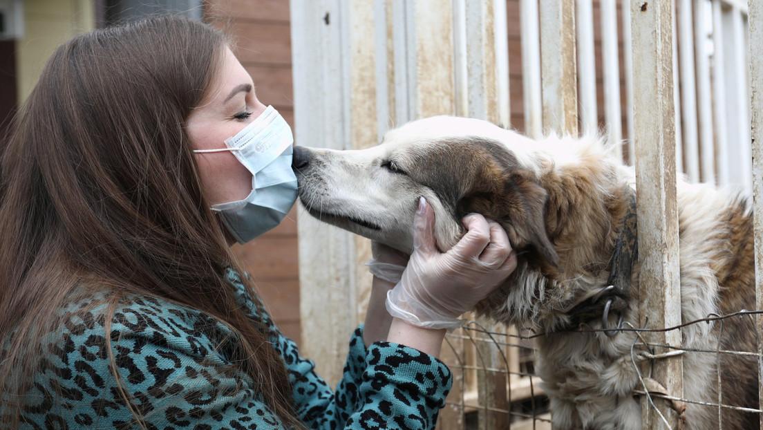 Científicos finlandeses entrenan a perros para detectar el covid-19