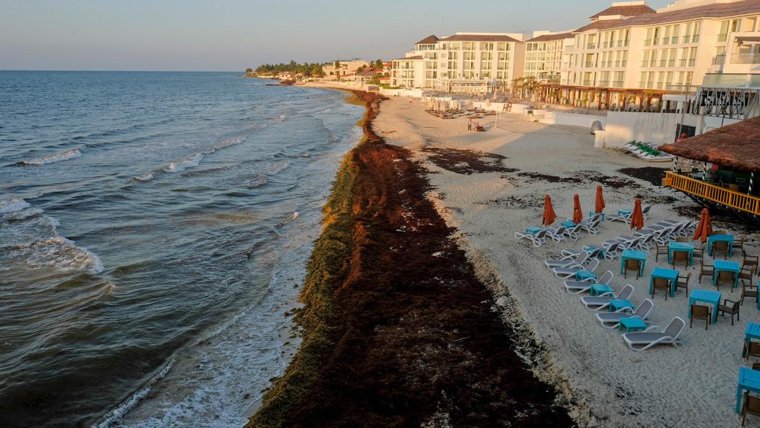 México, preparado para combatir el sargazo en las playas del Caribe tras la cuarentena por el coronavirus