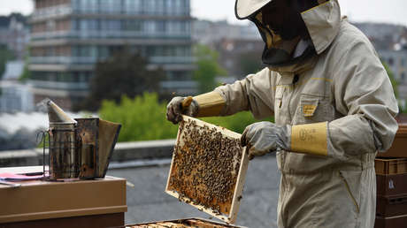 La Unión Europea planea reducir a la mitad el uso de pesticidas en 10 años para proteger a las abejas