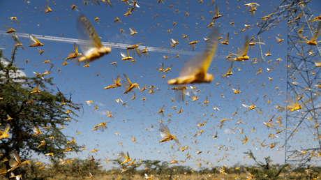 El Ejército de Irán ayudará a combatir las langostas del desierto que amenazan los cultivos