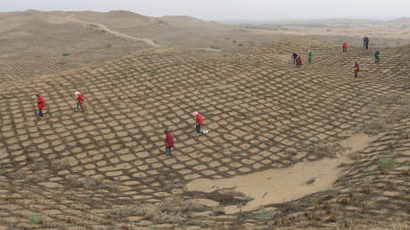 VIDEO: Un desierto en China se ha convertido en un oasis en 60 años