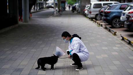 Un perro lleva 3 meses esperando en un hospital de Wuhan a su dueño fallecido