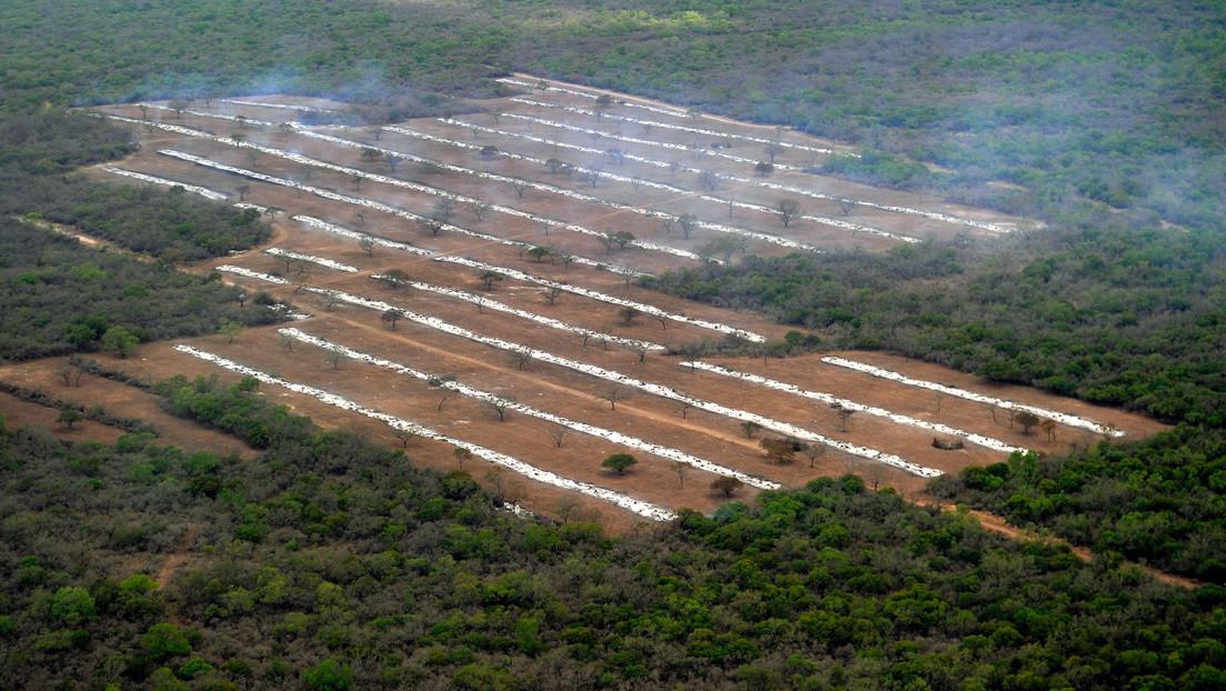 """La deforestación de Argentina durante la pandemia y una promesa de resistencia indígena: """"Pondremos nuestro cuerpo para frenarla"""""""