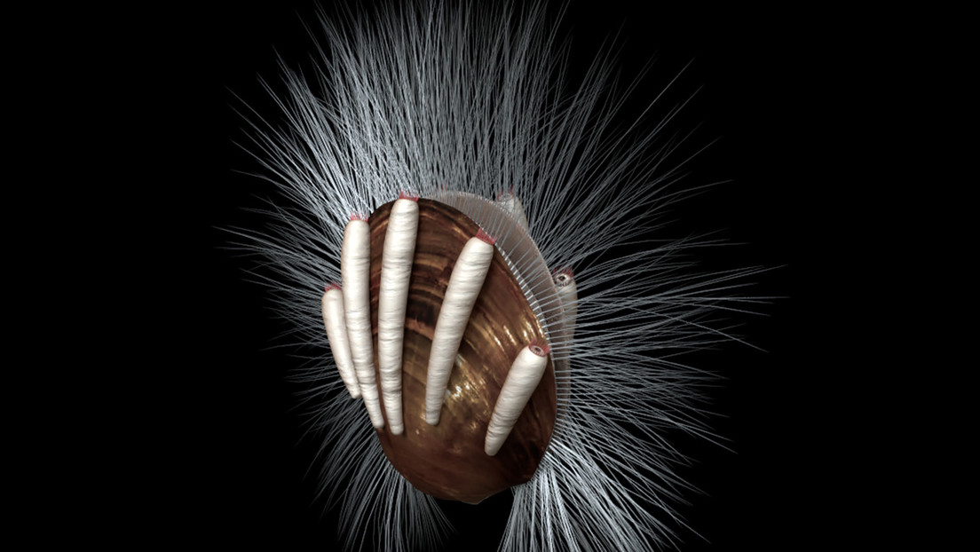 El parásito animal más antiguo encontrado en China: el 'gusano', que data de hace 512 millones de años