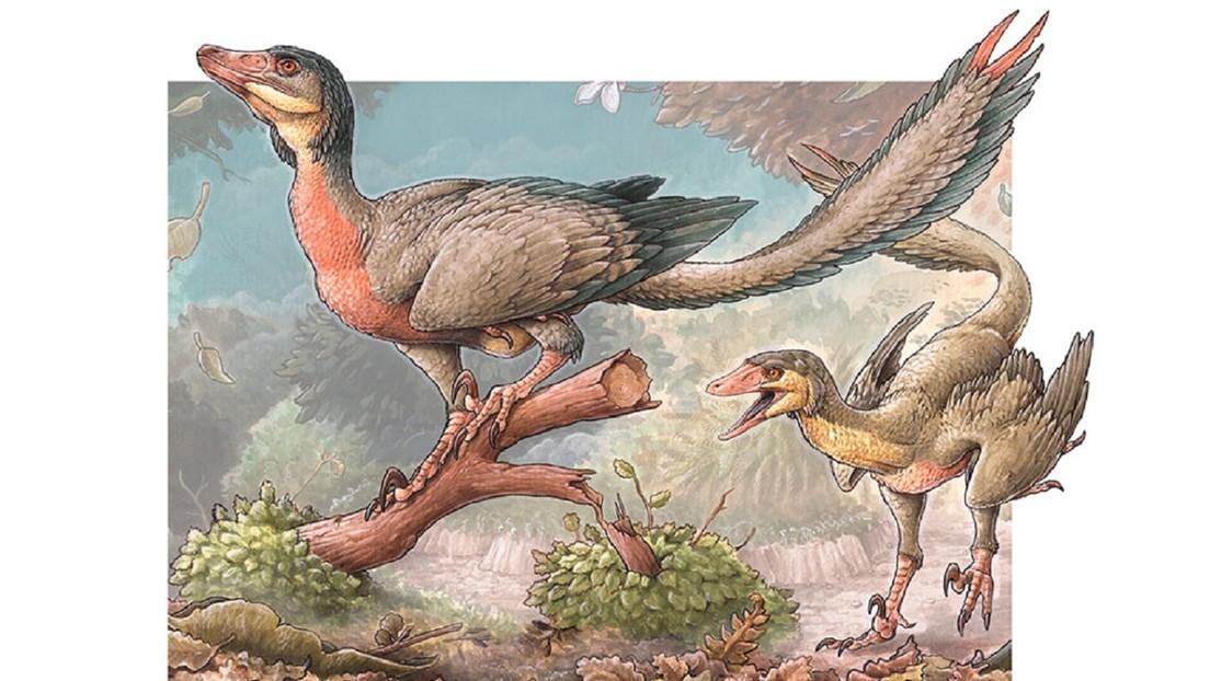 FOTO: Descubren una nueva especie de dinosaurio con alas en Argentina