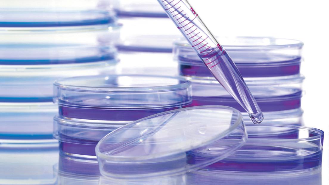 """Descubren la """"estrategia fundamental de supervivencia"""" del cáncer que lo hace resistente al tratamiento"""
