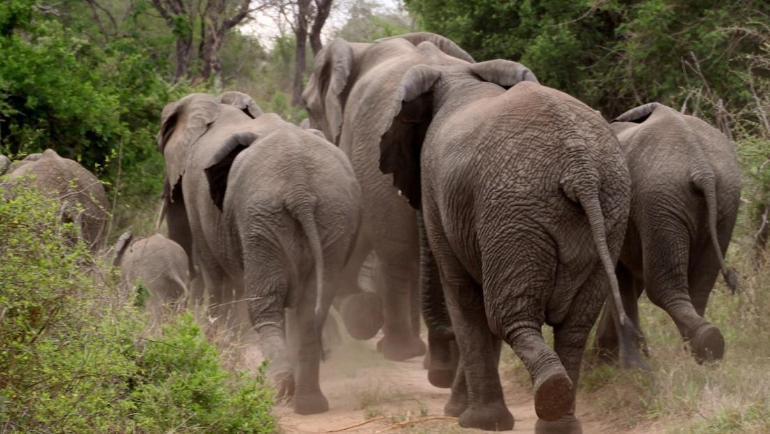 VIDEO: Dos elefantes arremeten contra un grupo de turistas en Sri Lanka