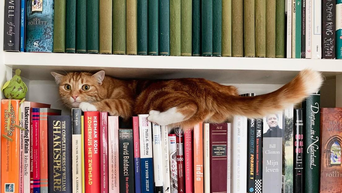 ¿Dónde está el gato? Se viraliza un nuevo reto que demuestra a las claras quiénes son los amos del camuflaje