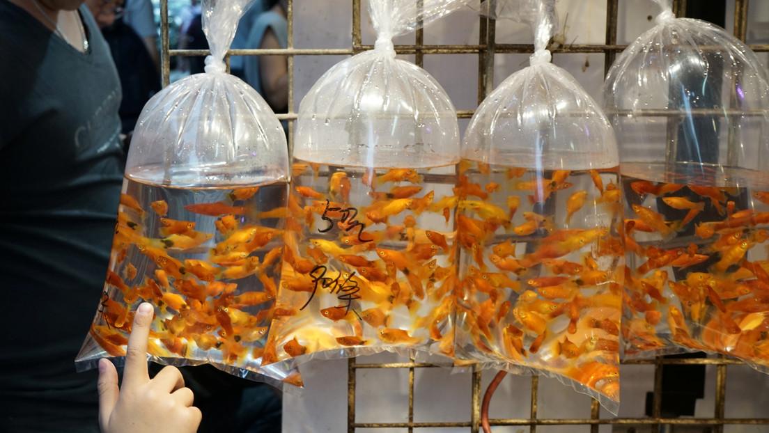 """Médicos chinos operan a un hombre para sacar de su cuerpo un pez en el que """"se sentó accidentalmente"""""""