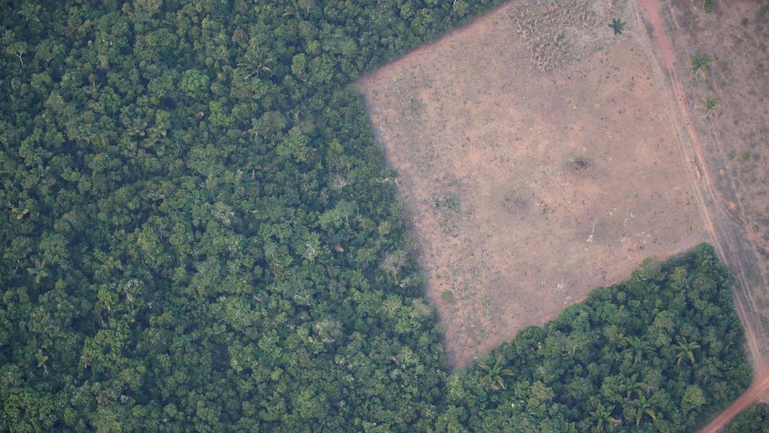 Las alertas por deforestación en la Amazonía registran cifras récord en mayo pese al envío del Ejército a la zona