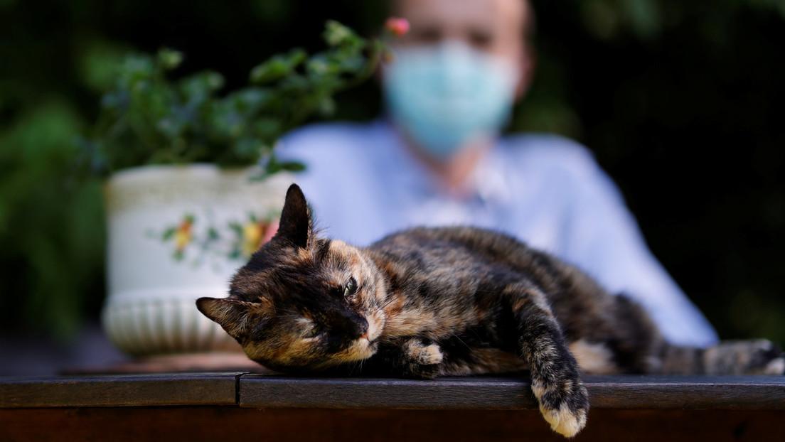 Un medicamento para gatos podría ser útil para combatir el coronavirus
