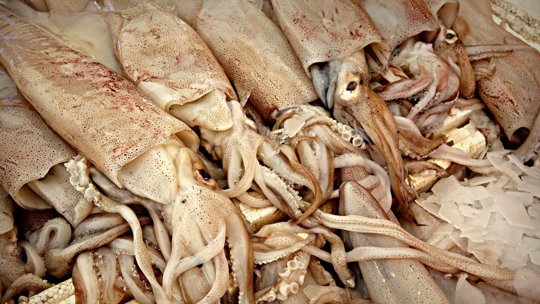 VIDEO: Un calamar gigante de cuatro metros aparece muerto en una playa de Sudáfrica